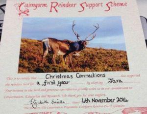 Jara the Reindeer